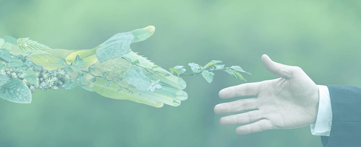 Desarrollo Sostenible: ¿Qué es y cuáles son sus objetivos?